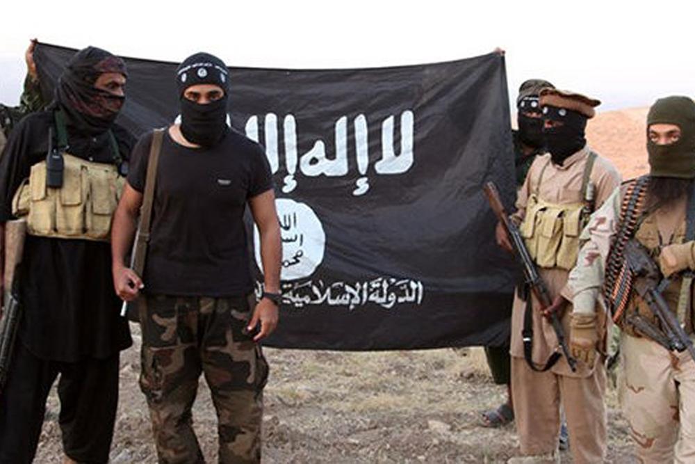 استفاده داعش از گاوهای انتحاری در عراق