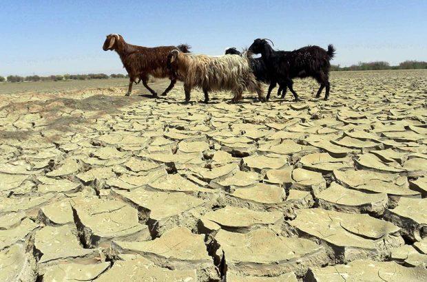 کرمان، دومین استان کشور در کاهش بارندگی