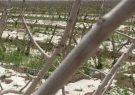 خسارت شدید تگرگ به ۷ هزار باغ پسته سیرجان