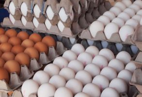 صادرات تخم مرغ آزاد شد