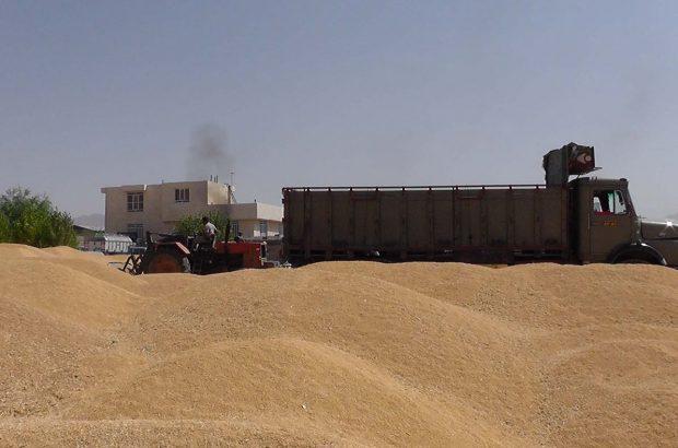 پلمب انبار یکهزار تنی گندم دپو شده در کرمان