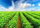 بیش از ۷۵ هزار تن از محصولات کشاورزی استان کرمان خریداری شد