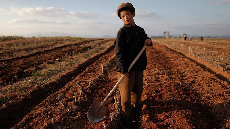 نصف مردم کره شمالی سوء تغذیه دارند