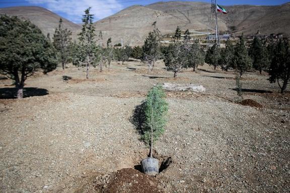 کاشت ۲۲ هزار گونه گیاهی در کمربند سبز گل گهر به سیرجان