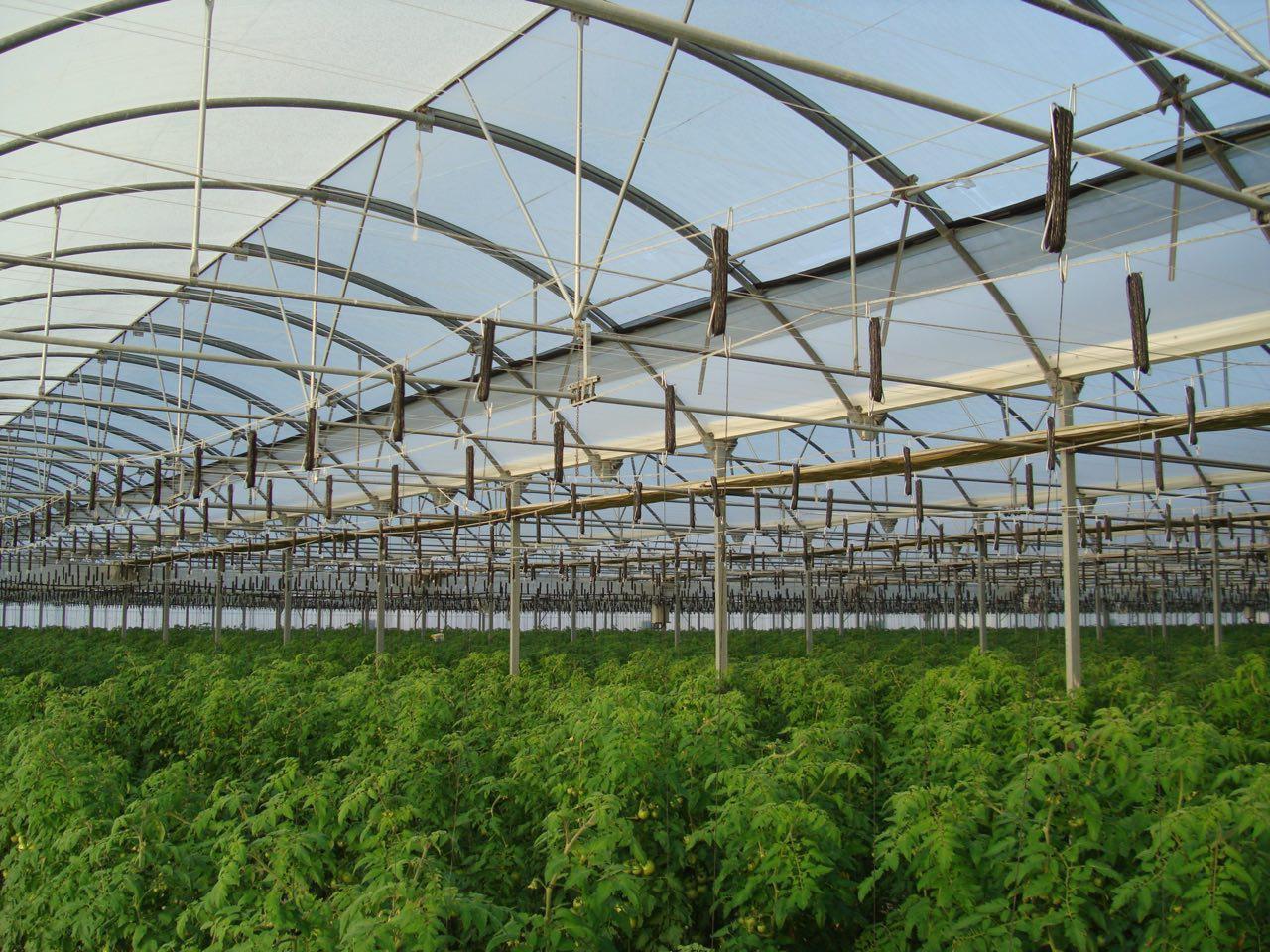 برداشت ۱۰ هزار تن انواع محصولات گلخانهای در ارزوئیه