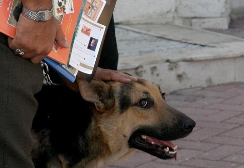 عامل سگ آزار به تبعید محکوم شد