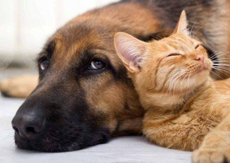 خوردن گوشت سگ و گربه در شهر «جوهای» چین ممنوع شد