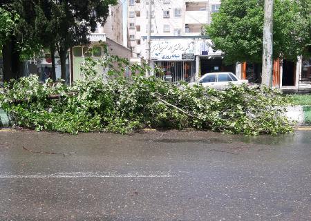 خسارت طوفان ۳ دقیقهای به ۳۰ اصله درخت در سیرجان